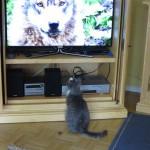 Pauli schaut Fernsehen