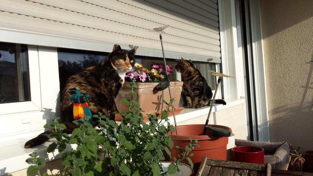 Mia&Kitty